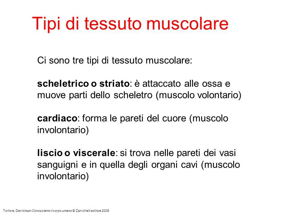 Tipi di tessuto muscolare