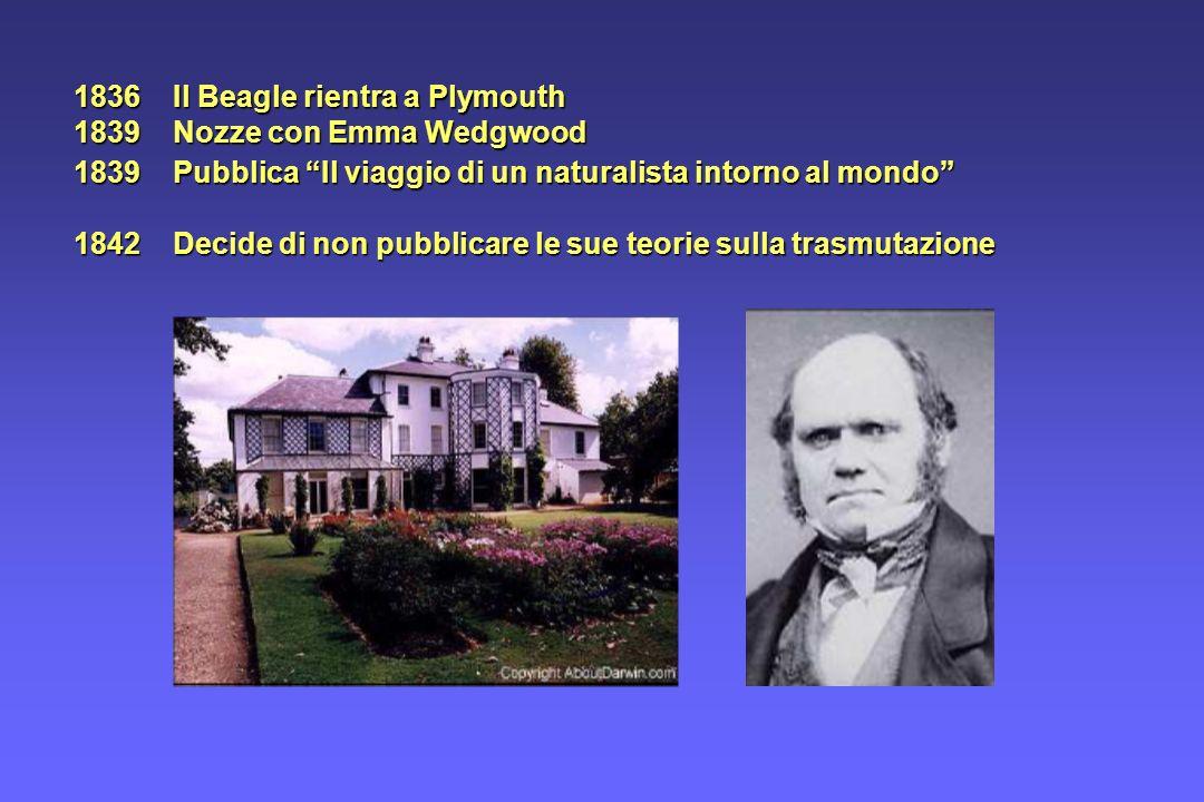 1836 Il Beagle rientra a Plymouth 1839 Nozze con Emma Wedgwood
