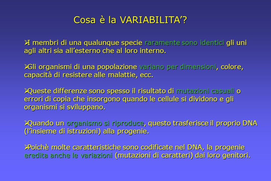 Cosa è la VARIABILITA' I membri di una qualunque specie raramente sono identici gli uni agli altri sia all'esterno che al loro interno.