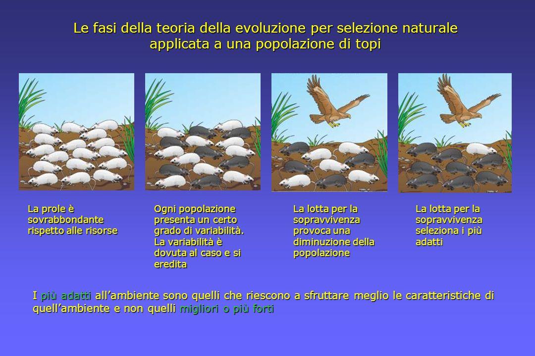 Le fasi della teoria della evoluzione per selezione naturale