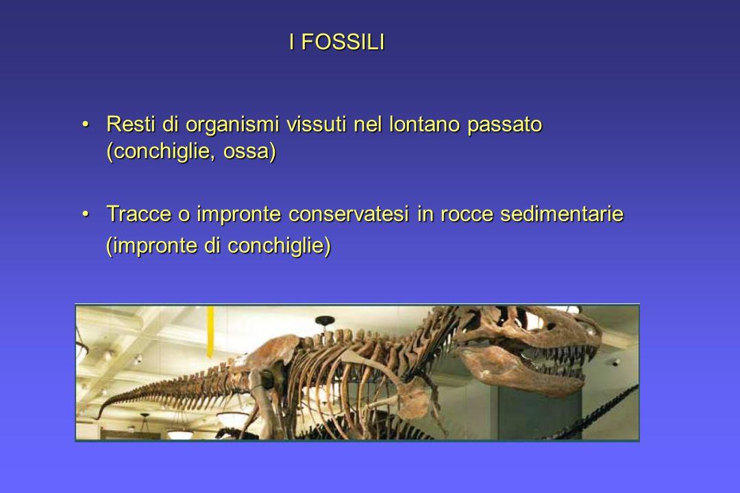 I FOSSILIResti di organismi vissuti nel lontano passato (conchiglie, ossa) Tracce o impronte conservatesi in rocce sedimentarie.