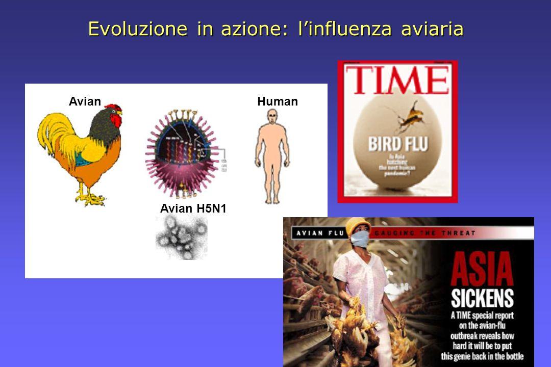 Evoluzione in azione: l'influenza aviaria