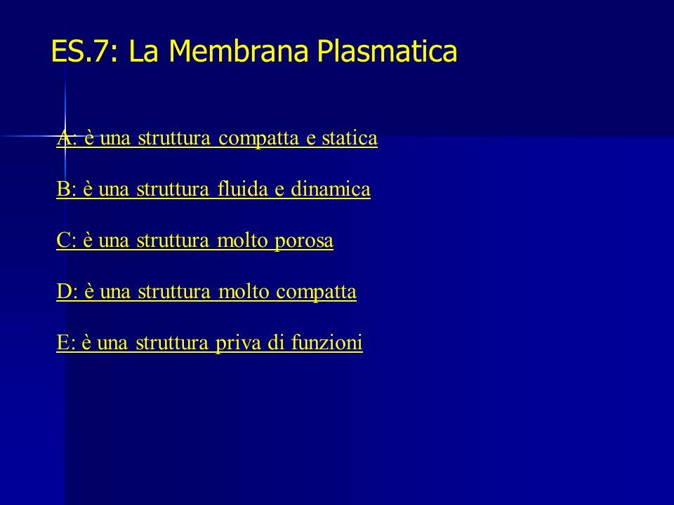 ES.7: La Membrana Plasmatica