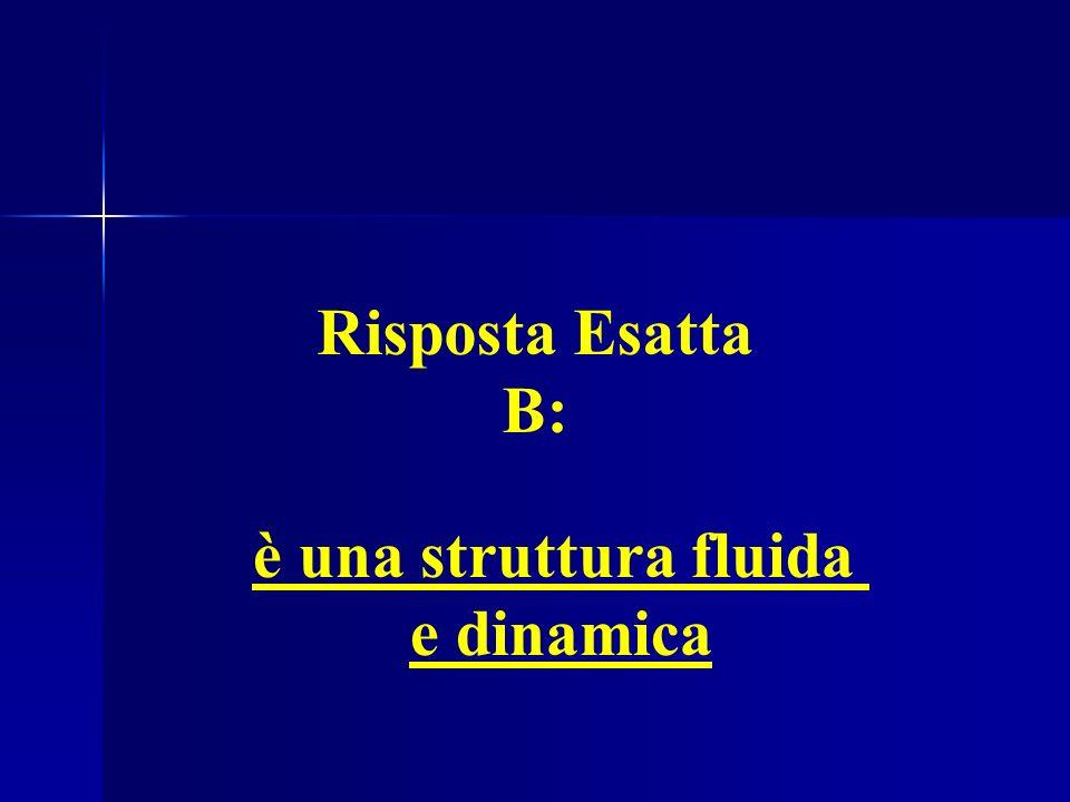 Risposta Esatta B: è una struttura fluida e dinamica