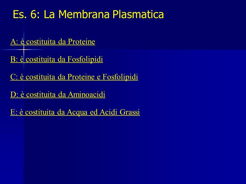 Es. 6: La Membrana Plasmatica