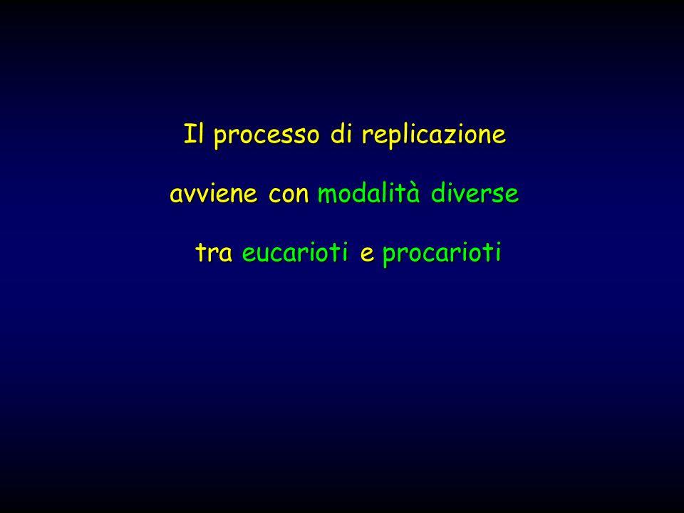 Il processo di replicazione avviene con modalità diverse