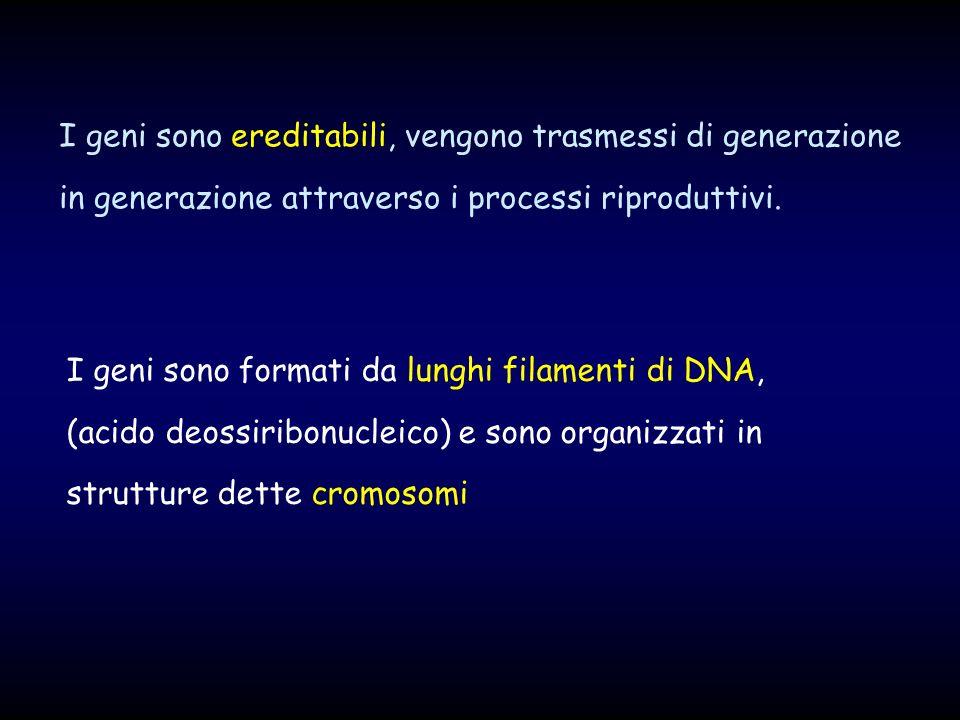 I geni sono ereditabili, vengono trasmessi di generazione in generazione attraverso i processi riproduttivi.