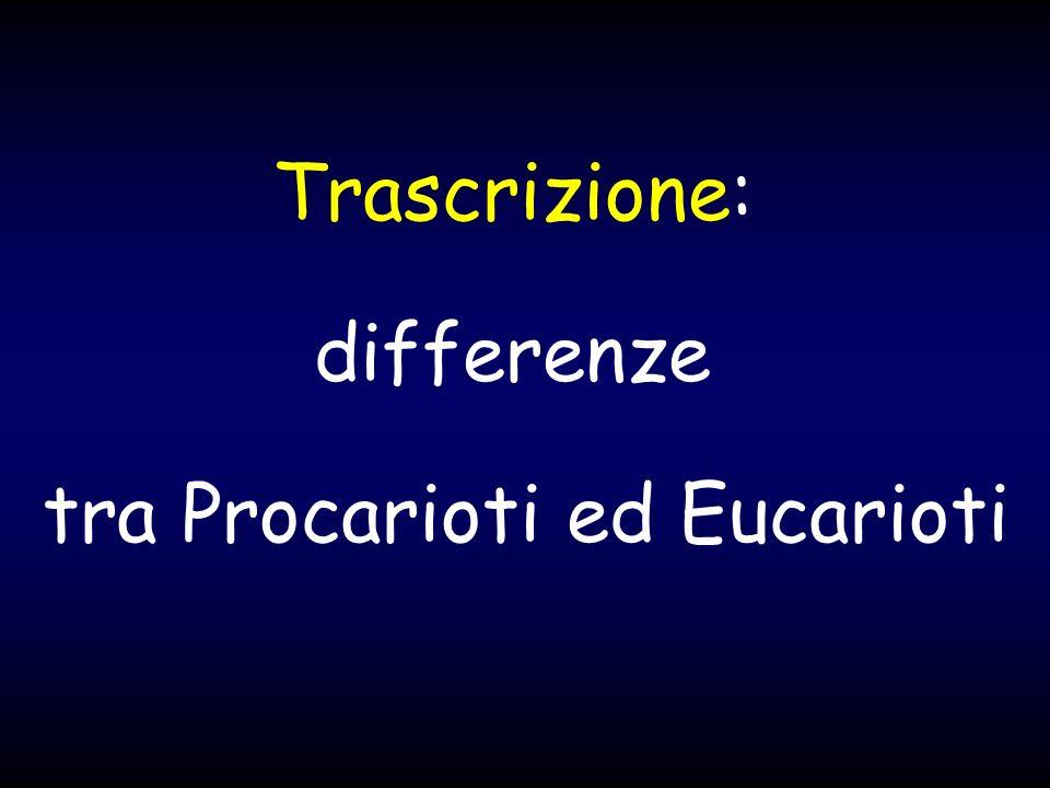 tra Procarioti ed Eucarioti