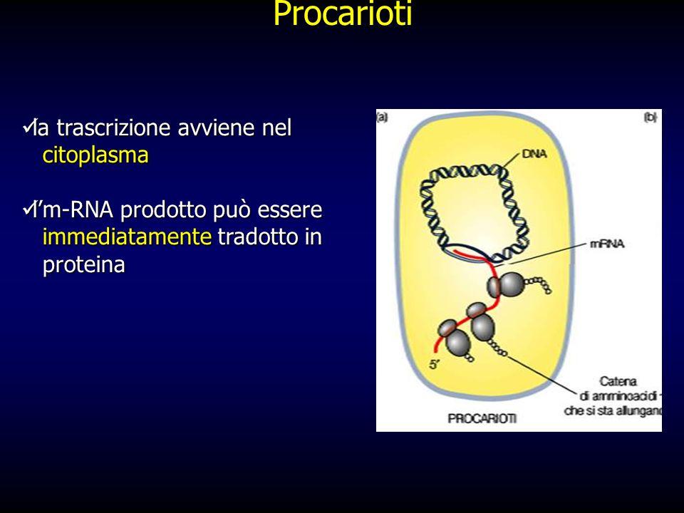 Procarioti la trascrizione avviene nel citoplasma