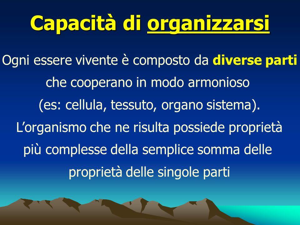 Capacità di organizzarsi