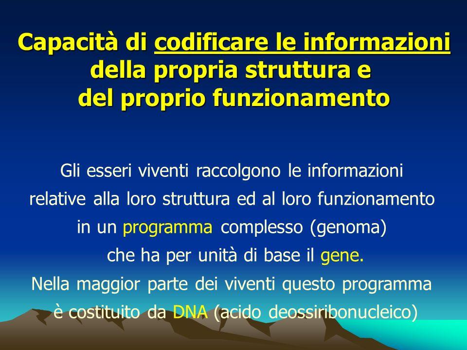 Capacità di codificare le informazioni della propria struttura e