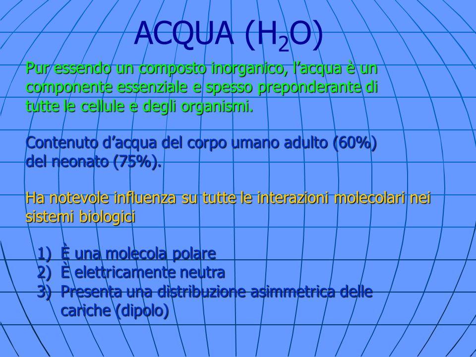 ACQUA (H2O) Pur essendo un composto inorganico, l'acqua è un componente essenziale e spesso preponderante di tutte le cellule e degli organismi.
