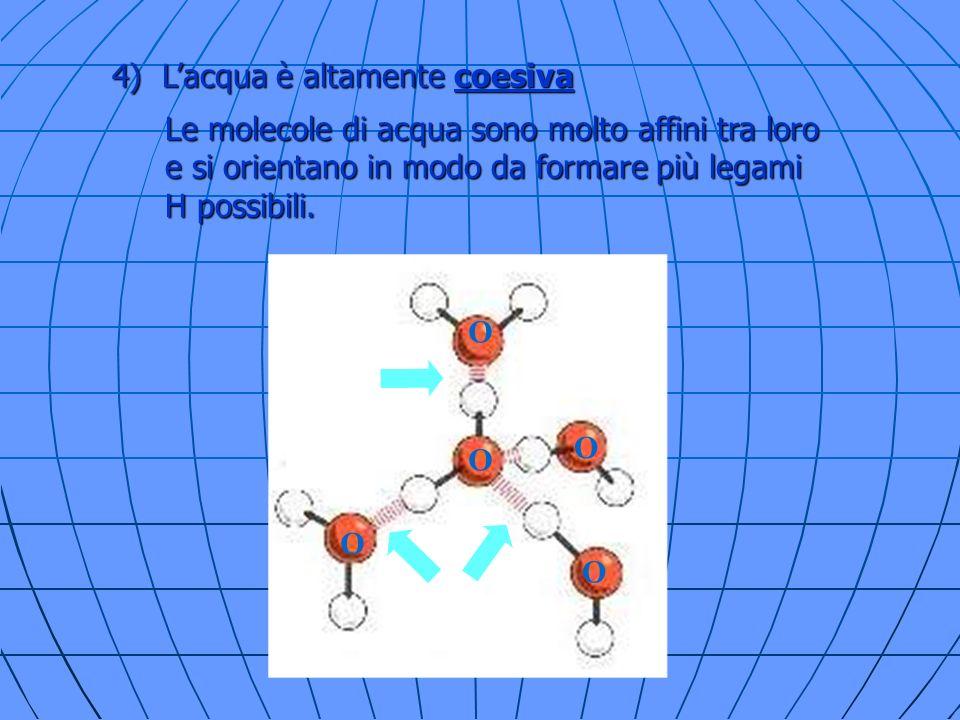 4) L'acqua è altamente coesiva