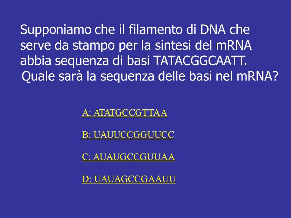 Quale sarà la sequenza delle basi nel mRNA