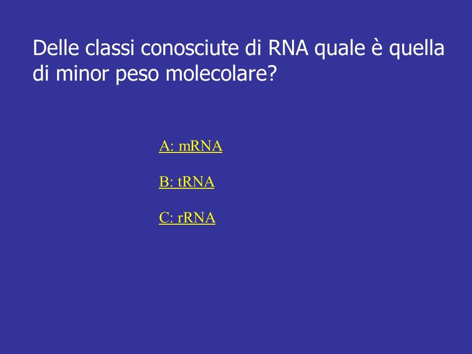 Delle classi conosciute di RNA quale è quella di minor peso molecolare