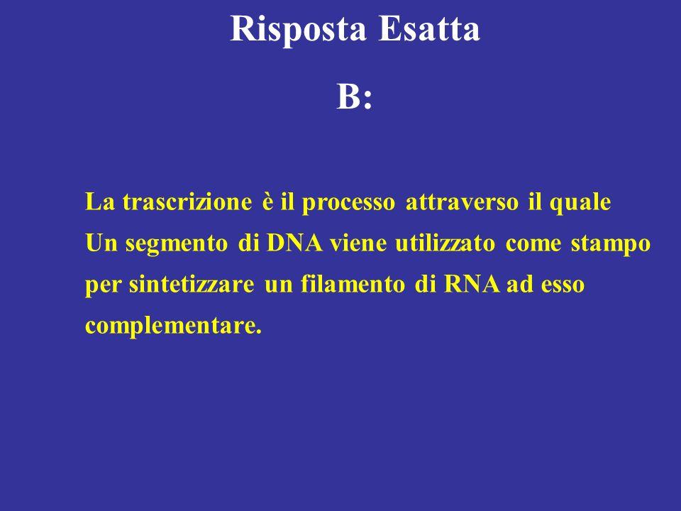 Risposta Esatta B: La trascrizione è il processo attraverso il quale