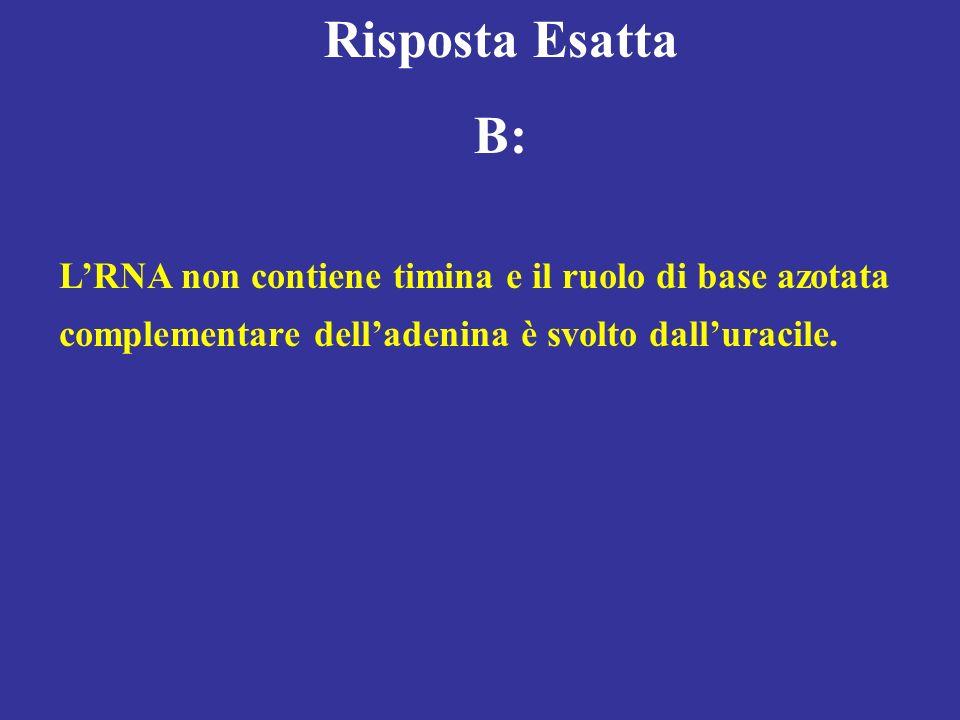 Risposta Esatta B: L'RNA non contiene timina e il ruolo di base azotata.