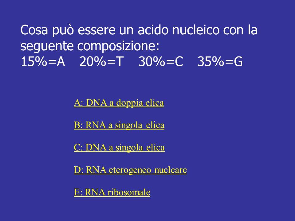 Cosa può essere un acido nucleico con la seguente composizione: