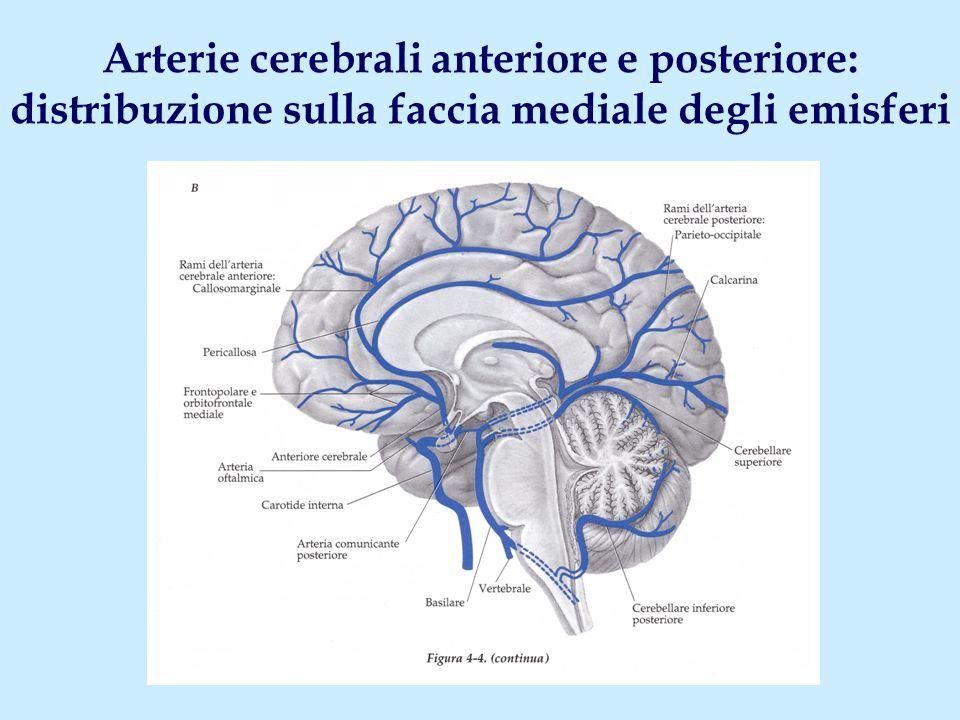 Arterie cerebrali anteriore e posteriore: distribuzione sulla faccia mediale degli emisferi