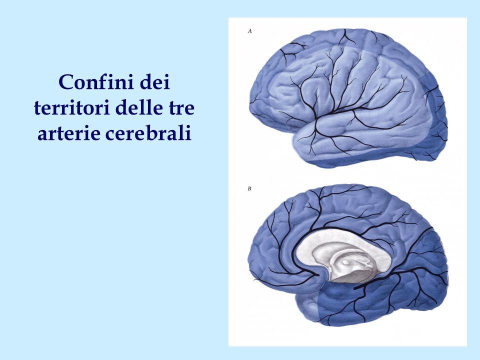 territori delle tre arterie cerebrali