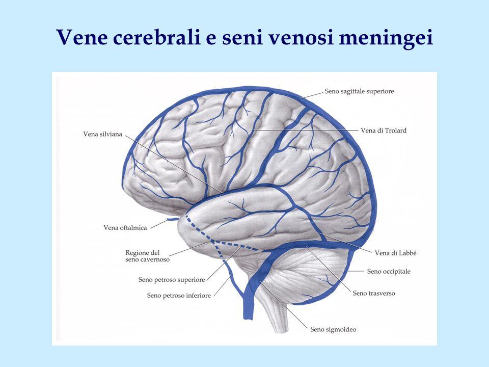 Vene cerebrali e seni venosi meningei