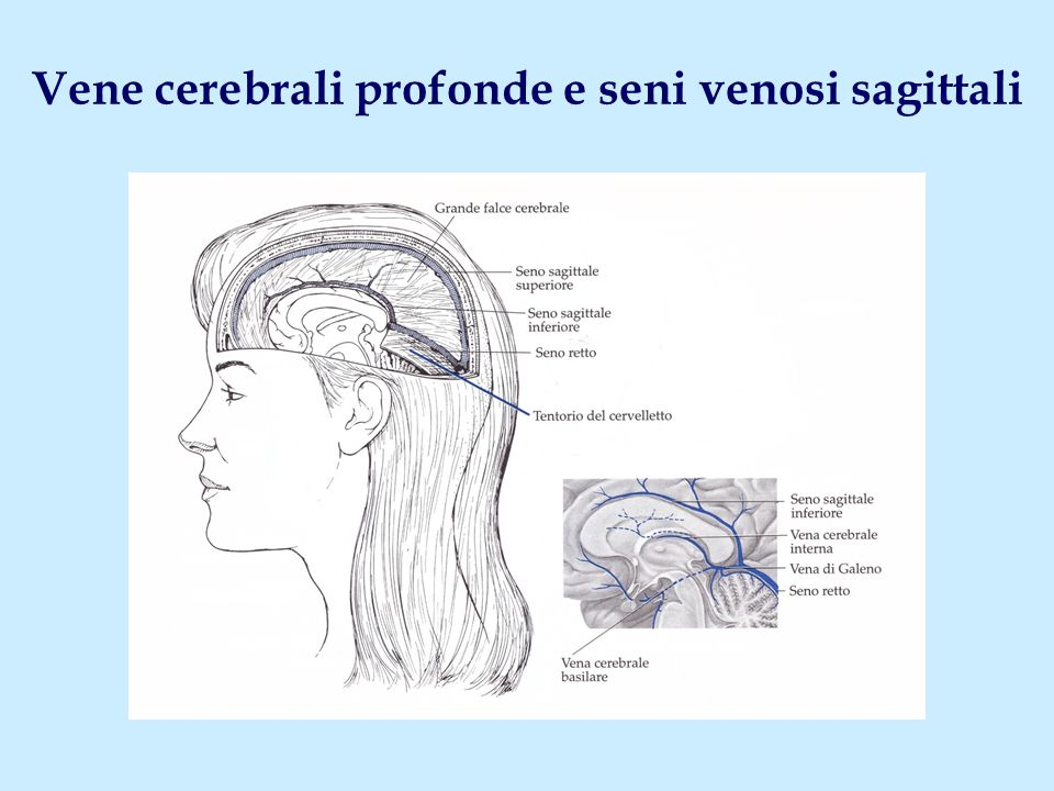 Vene cerebrali profonde e seni venosi sagittali