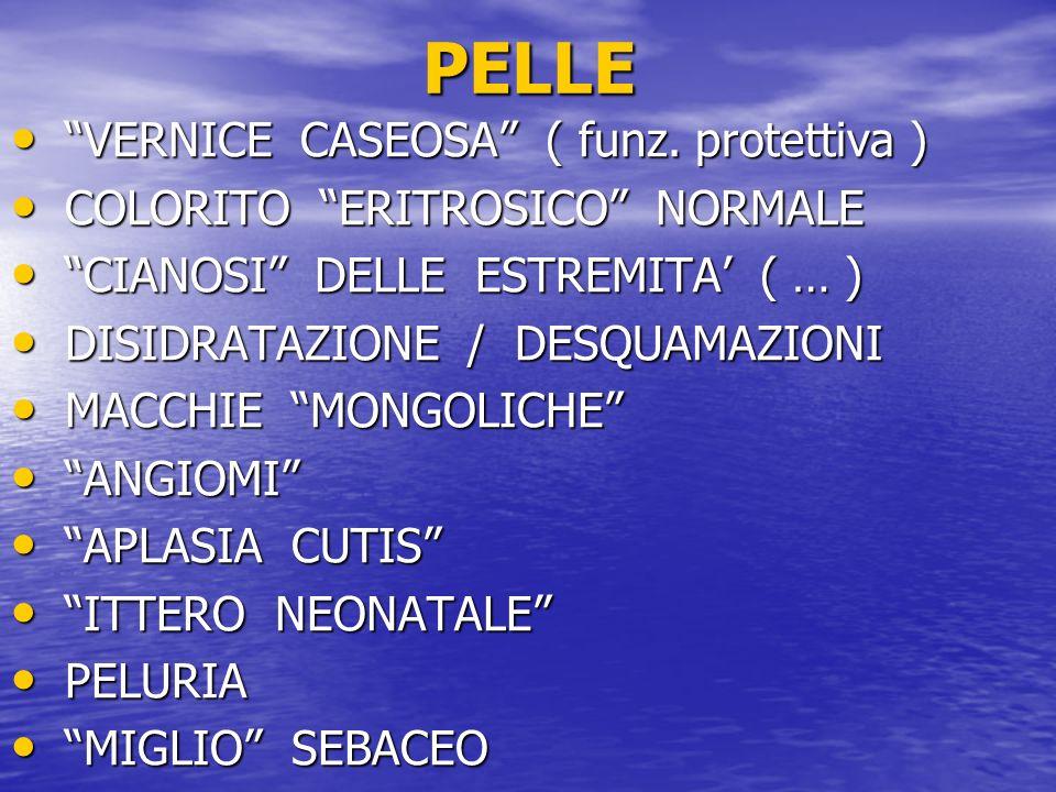 PELLE VERNICE CASEOSA ( funz. protettiva )