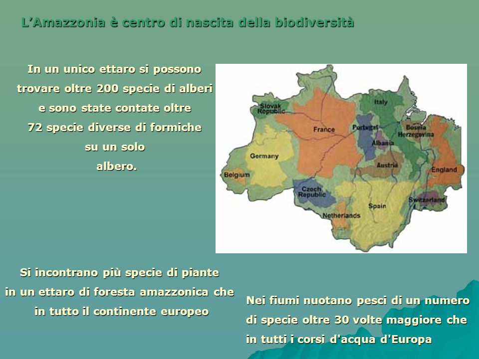 L'Amazzonia è centro di nascita della biodiversità