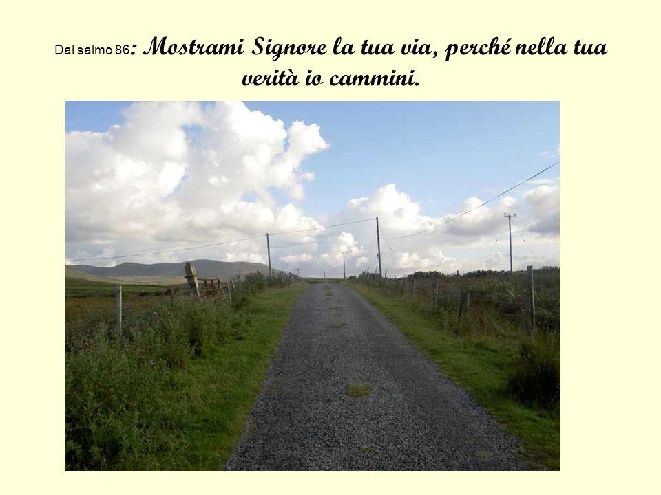 Dal salmo 86: Mostrami Signore la tua via, perché nella tua verità io cammini.