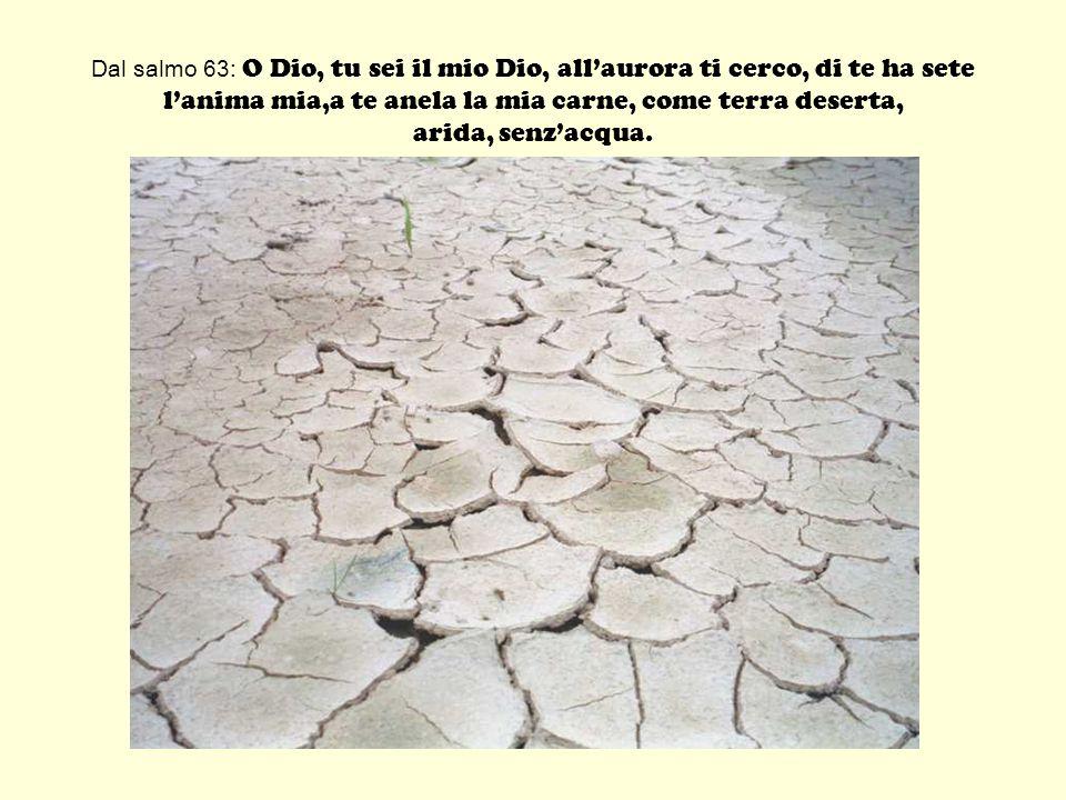 Dal salmo 63: O Dio, tu sei il mio Dio, all'aurora ti cerco, di te ha sete l'anima mia,a te anela la mia carne, come terra deserta, arida, senz'acqua.