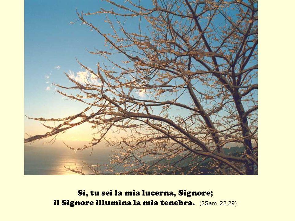Sì, tu sei la mia lucerna, Signore; il Signore illumina la mia tenebra. (2Sam. 22,29)
