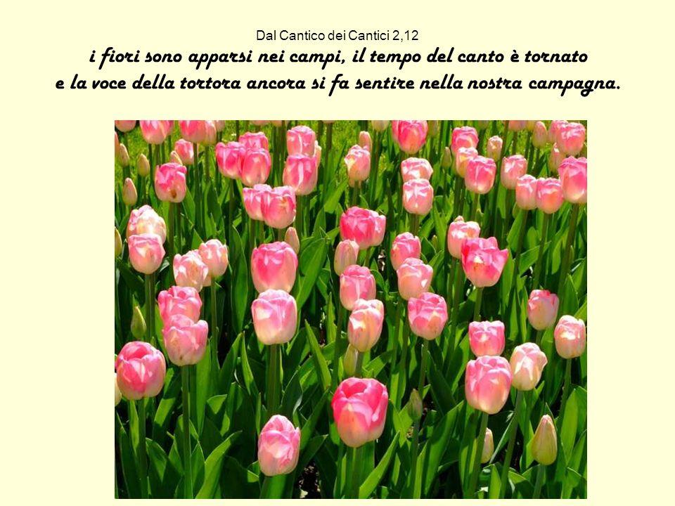 Dal Cantico dei Cantici 2,12 i fiori sono apparsi nei campi, il tempo del canto è tornato e la voce della tortora ancora si fa sentire nella nostra campagna.