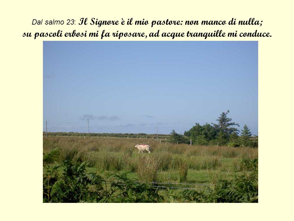 Dal salmo 23: Il Signore è il mio pastore: non manco di nulla; su pascoli erbosi mi fa riposare, ad acque tranquille mi conduce.