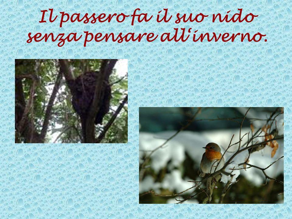 Il passero fa il suo nido senza pensare all'inverno.