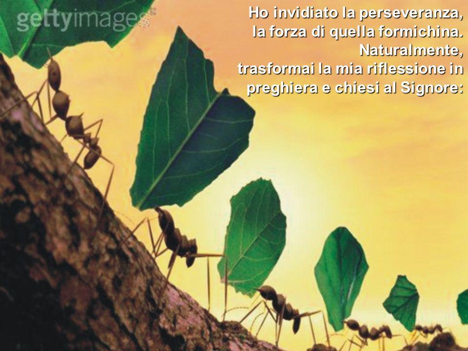 Ho invidiato la perseveranza, la forza di quella formichina