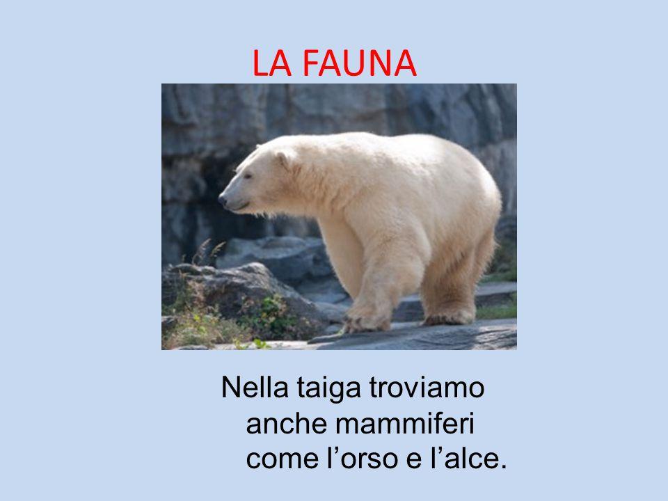 LA FAUNA Nella taiga troviamo anche mammiferi come l'orso e l'alce.