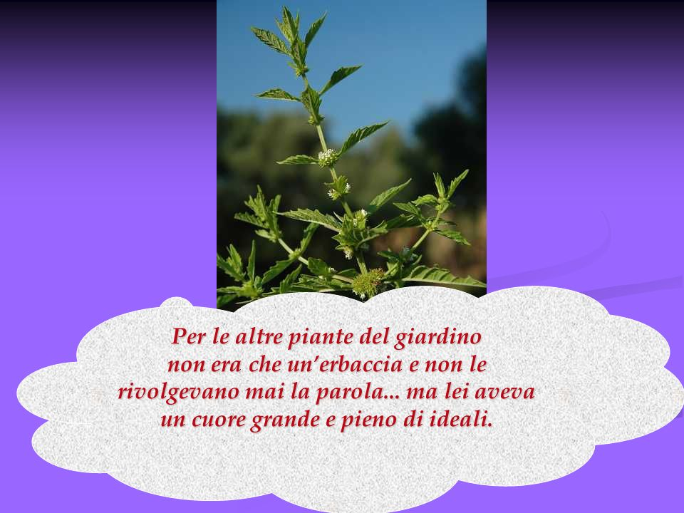 Per le altre piante del giardino non era che un'erbaccia e non le rivolgevano mai la parola...