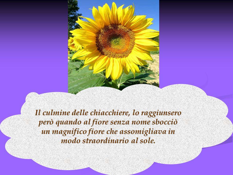 Il culmine delle chiacchiere, lo raggiunsero però quando al fiore senza nome sbocciò un magnifico fiore che assomigliava in modo straordinario al sole.