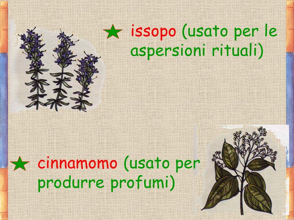 issopo (usato per le aspersioni rituali)