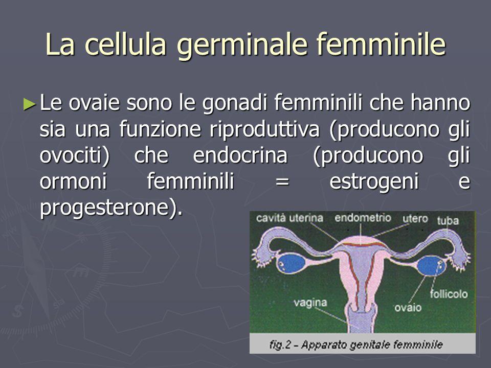 La cellula germinale femminile
