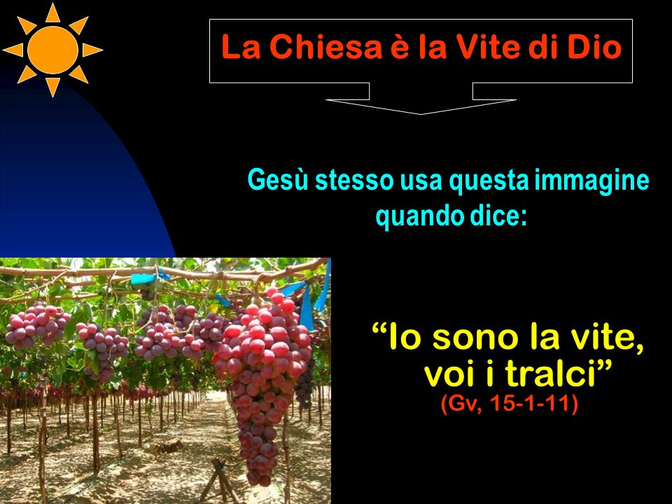 La Chiesa è la Vite di Dio Gesù stesso usa questa immagine