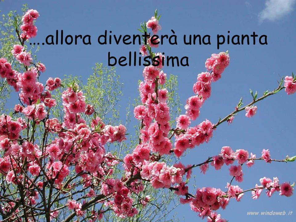 ….allora diventerà una pianta bellissima