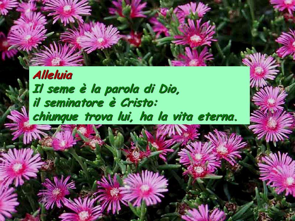Alleluia Il seme è la parola di Dio, il seminatore è Cristo: chiunque trova lui, ha la vita eterna.