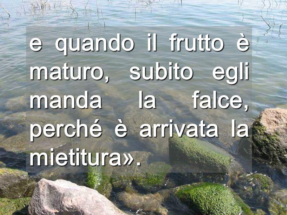 e quando il frutto è maturo, subito egli manda la falce, perché è arrivata la mietitura».