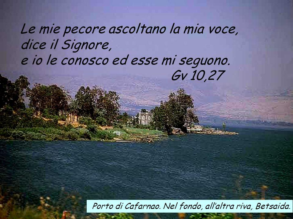 Le mie pecore ascoltano la mia voce, dice il Signore,