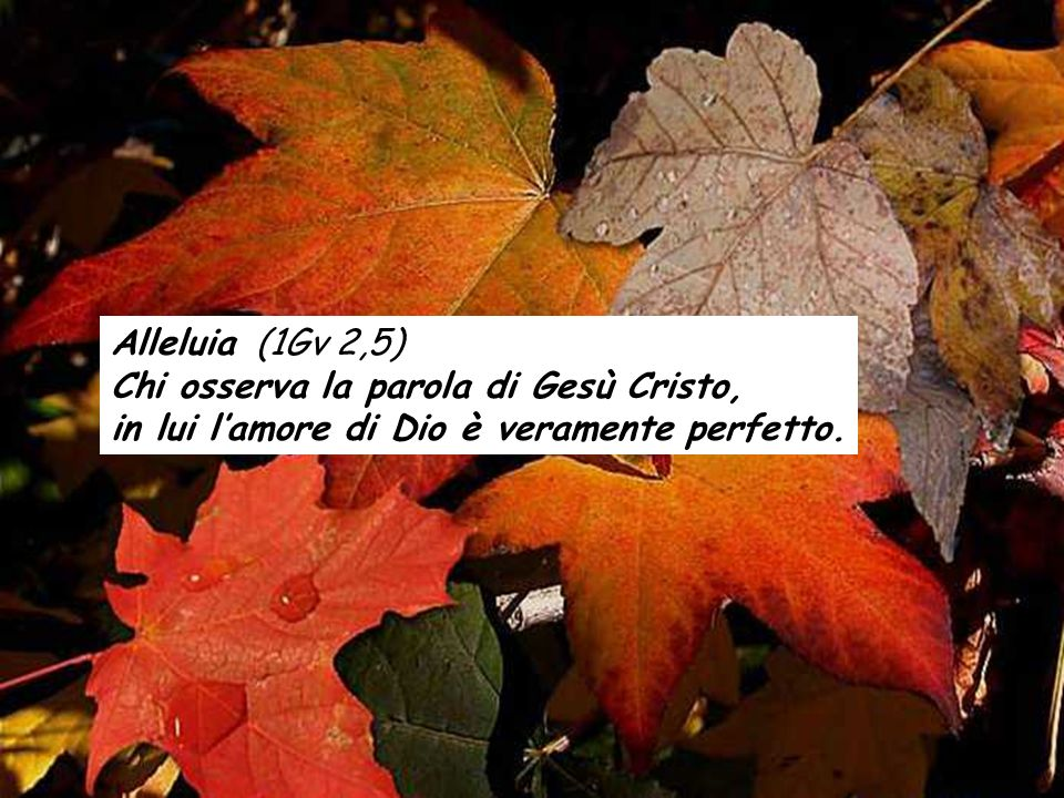 Alleluia (1Gv 2,5) Chi osserva la parola di Gesù Cristo, in lui l'amore di Dio è veramente perfetto.