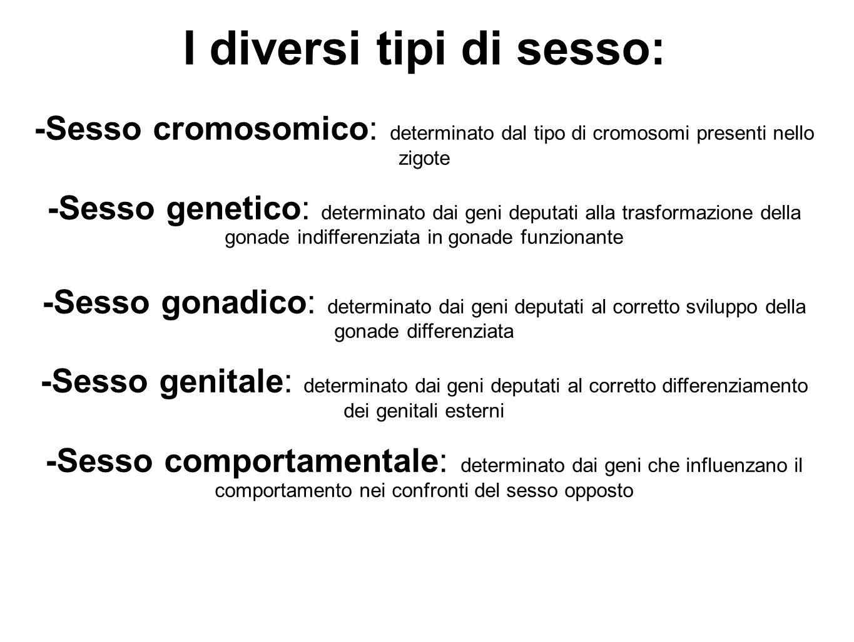 I diversi tipi di sesso: