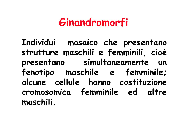 Ginandromorfi