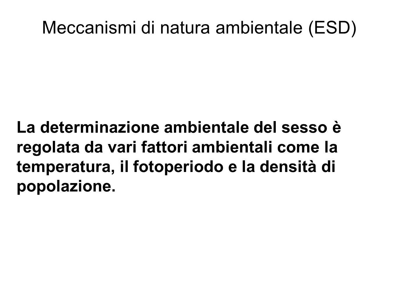 Meccanismi di natura ambientale (ESD)