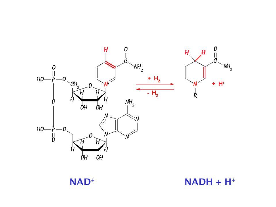 NAD+ NADH + H+